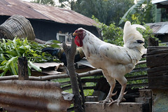 (Talia Ricci) Tags: village photos flag orphanage ghana cameras washing potters volta accra dodowa