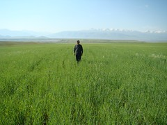 Barley fields monitoring (UNDP in Europe and Central Asia) Tags: poverty chat energy farmers environment pastures agriculture livestock kyrgyzstan solarpower hydropower undp suusamyrvalley sandyk greentechnologies sustainablelandmanagement