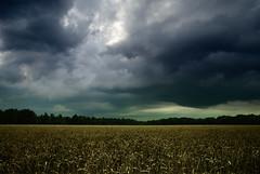 something is going on (=Я|Rod=) Tags: wood field weather landscape explore landschaft wald 116 stormfront sittensen colorefex nikond80 nikon1685vr