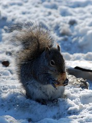 049_edited-1 (courtneyureel) Tags: winter snow chicago ice december snowy 2010 icebound