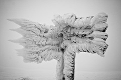 Fingerpost (Raphs) Tags: winter bw white snow cold ice bayern bavaria wind summit signpost needles canoneos350d gettyimages raphs bayerischerwald fingerpost bavarianforest lusen nationalparkbayerischerwald tamronspaf1750mmf28xrdiiildaspherical