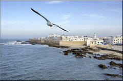 the white queen (mhobl) Tags: bird town seagull morocco shore maroc ramparts walls essaouira kste mogador minarett
