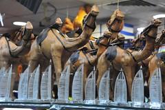 Camels to buy in Dubai store window (D70) Tags: window store dubai burjalarab buy camels unitedarabemirates ae