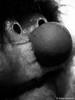 Animal 07.01.2012