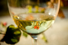 Late harvest/Vendemmia tardiva 33 (sophystica) Tags: flowers italy white reflection glass canon wine traditions fiori perugia bianco umbria vino bicchiere riflesso tradizioni lateharvest eos500d sophystika vendemmiatardiva