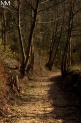 La senda... | The path... (Michael Orton Style) (maf.mendoza) Tags: naturaleza nature ruta way camino path asturias avils senda corveradeasturias ortoneffect efectoorton