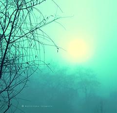Niebla en el alma ... (Mariló Irimia) Tags: blue trees winter sun sol fog azul landscape nikon árboles branches paisaje invierno niebla ramas softtones psedition olétusfotos tonossuaves mygearandme marilóirimia marilóirimiafotografía ediciónconps