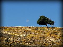 Pezi elements..... (Kalsjon) Tags: moon tree landscape ikaria greece elements pezi