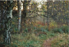 (a.n.k.i.) Tags: autumn trees tree film nature analog 35mm germany deutschland hamburg herbst natur squat zenit analogue bume baum squatted 2011 straightoutofthecamera besetzt sooc kleinbild zomia exzomia