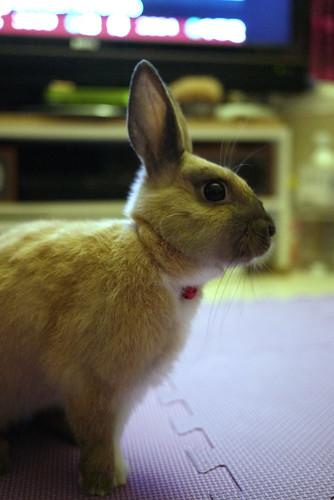 兔-NANA_32