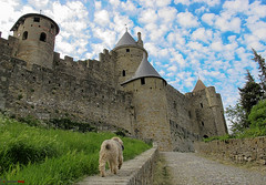 El perro va al castillo / The dog goes to the castle (german_long) Tags: france castle francia carcassonne castillo