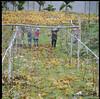 葡萄園  Vineyard (Chieh-Yu) Tags: film taiwan hasselblad 南投 台灣 nantou shinyi 信義 攝團 facebookimpro