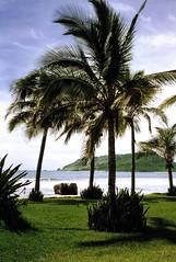 1990-Mazatlan Trip-El Cid's Park-Like Grounds-02 (David Cummings62) Tags: beach mexico hotel mazatlan vacations elcid davidcummings davecummings davidcummingsphotos davecummingsphotos
