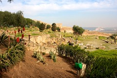Across the Chellah (Diziet) Tags: holiday morocco 2012 rabat chellah