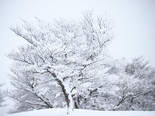 White world