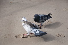 Playing hard to get (Poupetta) Tags: courting beachlovers themediterraneansea thegameoflove