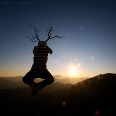 Le Cerf Volant (Le***Refs *PHOTOGRAPHIE*) Tags: light sunset sun nature silhouette montagne soleil nikon lumiere flare layers hallo bois coucherdesoleil montains cerf d90 volant cvennes lerefs