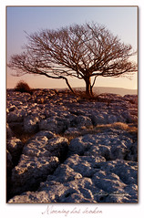 sunup (seve) Tags: uk morning light england sun sunlight tree nature canon 350d dawn rocks imac path photoshopped wildlife cumbria canon350d daybreak knott farleton stevegregory 180550mm borderfx mygearandme ringexcellence applecrypt flickrstruereflection1 wwwflickrcomphotosapplecrypt