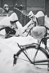 (sara zollino) Tags: city winter urban bw snow cold italia raw bikes bn neve bologna bici inverno freddo bicicletta
