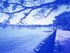 POLAROID-ROSE BAY (Eva Flaskas) Tags: blue trees sky tree film water rose project walking lens polaroid boats paul bay boat eva path sydney australia iso type instant 100 peel expired 80 edition impossible apart 75mm 600se flaskas giambarba