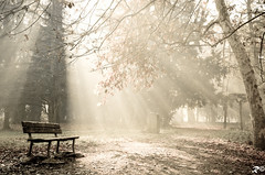 Wait the light (Riccardo Brig Casarico) Tags: morning autumn light italy flower green nature colors alberi wow photography ph