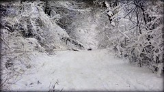 World of White - winter snow (blmiers2) Tags: world travel trees winter white snow cold nature photography nikon 2012 d3100 blm18 blmiers2