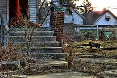 Hobby Horse (TooLoose-LeTrek) Tags: urban toy decay detroit steps abandon porch hobbyhorse blight hs30