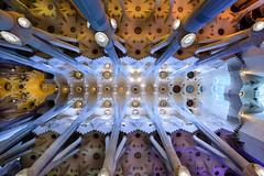 Sagrada Familia (Ron Scubadiver's Wild Life) Tags: barcelona roof familia architecture spain nikon cathedral columns 20mm sagrada zenith