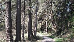 20160331_091308 (ks_bluechip) Tags: creek evans trails preserve sammamish usa2106