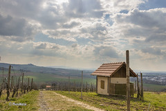 Weinlehrpfad Gro-Umstadt (PhotoMatze) Tags: landscape hessen landschaft odenwald weinberge