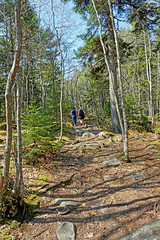NS-00325 - Rough Path (archer10 (Dennis) (74M Views)) Tags: park canada novascotia path sony dingle free hike trail dennis jarvis iamcanadian mirrorless dinglepark freepicture 1650mm dennisjarvis a6300 sirflemmingpark archer10 dennisgjarvis ilce6300