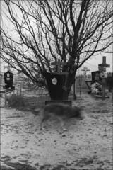 Local dog on a local cemetery (misha maslennikov) Tags: bw film nikon russia don f3 steep senshin maslennikov otherrussia