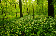 Day in the Forest (Moustafa Kzaiha) Tags: wood flowers trees light green nature beautiful forest germany outdoors spring europe day sony hdr a7