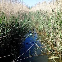 Photo of East Cramlington Nature Reserve, Northumberland