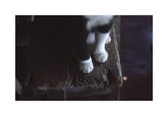 * (Daniel Espinoza) Tags: love film cat mexico fineart transparency pelicula analogue analogphotography analogica diapositive filmphotography fujiprovia100 onlyfilm contaxtvsii danielespinoza