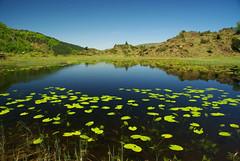 L'Estagnon (Arige) (PierreG_09) Tags: lac nnuphar hers pyrnes pirineos arige tourbire couserans lestagnon