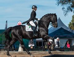 160611_Clarendon_Winter_Festival_3052.jpg (FranzVenhaus) Tags: horses sydney australia riding newsouthwales athletes aus equestrian supporters riders officials dressage spectatorsvolunteers
