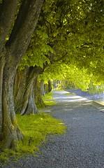 Promenade (oliko2) Tags: trees path promenade postprocessing lakeconstance nikcolorefex nikond7100
