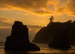 golden (reserves13) Tags: ocean sunset gold shoreline pacificocean pacificnorthwest washingtonstate rubybeach seastacks