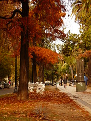 MIL HOJAS (su-sa-ni-ta) Tags: autumn trees people naturaleza nature argentina leaves colores personas paseo rosario otoo ocres boulevardoroo