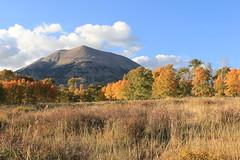 Aspens in Fall Mt Peale, Utah (Gardens de Vine) Tags: fall mt aspens peale
