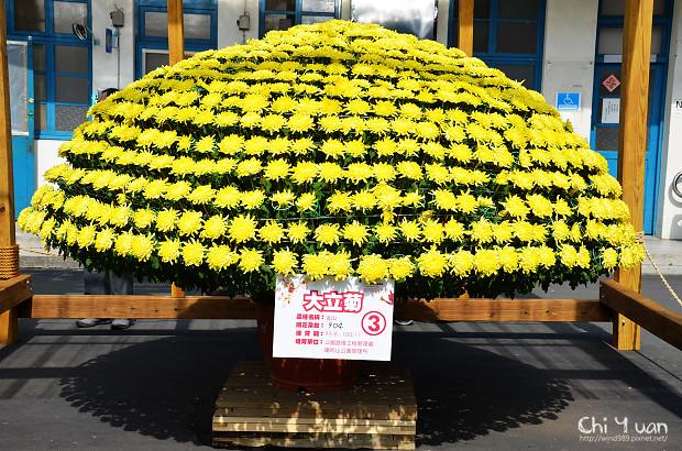 2011士林官邸菊展17.jpg