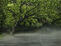 Steaming road (Ian@NZFlickr) Tags: road tree rain drive steam queens nz otago dunedin after olveston