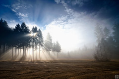 You're my guiding light (gregor H) Tags: landscape forest opening breakthrough sunlight rays beam reed goldengrass fog misty edge autumn mood atmospheric göfis voralberg