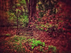 Waiting IV (scottwills) Tags: wood autumn trees brown color tree fall forest garden bench landscape woods waiting scottwills wwwscottwillscouk
