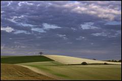 Plaine Seine et Marnaise (@lain G) Tags: champs arbre iledefrance plaine seinemarne paroy leuropepittoresque