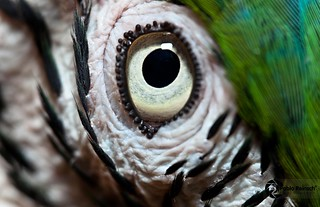 Close eye...