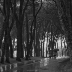 Side by side (Orione Photographer) Tags: street trees italy laura streetphotography tuscany sidebyside rs 70200 ef70200f4is 5dmarkii eos5dmarkii orione1959