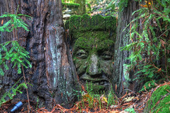 Old Man of the Redwood (Floyd's Noise) Tags: carving redwood santacruzmountains sveadal uvascreek