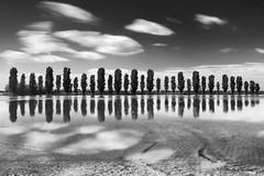 thirty-two #2 (nicola tramarin) Tags: longexposure trees italy reflection tree field clouds italia nuvole rice emilia ferrara romagna riflesso risaia lungaesposizione nicolatramarin